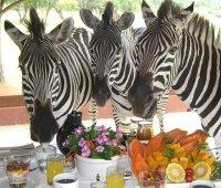 Safari Luxury Experience & New Year's Eve Celebration